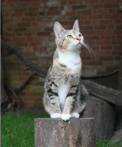 Katze Penny